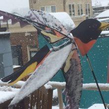 Snowbird E1427134766439